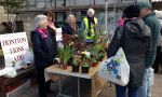 Lions Ladies at the plant stall in Honiton and it was cold